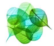 Macro foglie verdi isolate Immagine Stock