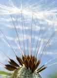 Macro fond abstrait de fleur Photo libre de droits