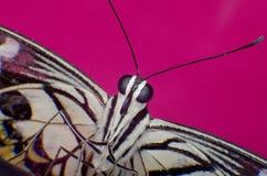 Macro fond coloré de papillon Image stock