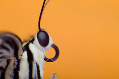 Macro fond coloré de papillon Image libre de droits