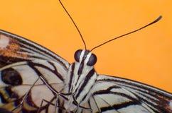 Macro fond coloré de papillon Photographie stock