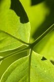 Macro fond vert de lame Photos stock