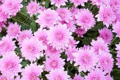 Macro fondo dell'immagine del fiore porpora Fotografia Stock Libera da Diritti