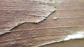 Macro fondo di legno di struttura Fotografie Stock Libere da Diritti