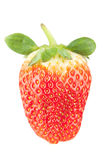 Macro food collection - Strawberry Royalty Free Stock Image
