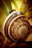Macro formica su Shell Immagine Stock Libera da Diritti