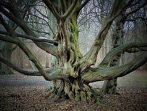 Macro foto con il fondo marzo del paesaggio i primi giorni di molla nel parco con gli alberi decorativi Fotografia Stock Libera da Diritti