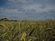 Macro foto con un fondo decorativo del paesaggio di un giorno di estate, cielo grigio triste prima di un temporale e pioggia Fotografie Stock Libere da Diritti