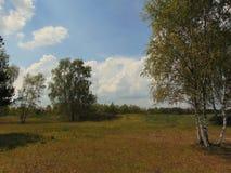 Macro foto con un fondo decorativo del paesaggio rurale Fotografie Stock Libere da Diritti