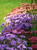 Macro foto con un fondo decorativo per i cespugli di fioritura di autunno e di estate delle rose e dei fiori del giardino Fotografia Stock Libera da Diritti