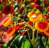 Macro foto con un fondo luminoso di estate con il fiore decorativo Fotografia Stock Libera da Diritti