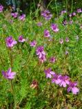 Macro foto con un fondo luminoso di estate con il fiore decorativo Immagine Stock
