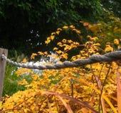 Macro foto delle foglie di autunno dorate su fondo vago dello stagno del parco Fotografia Stock