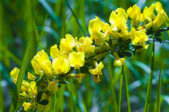 Macro foto delle piante Fotografia Stock
