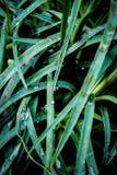Macro foto di erba verde per i precedenti fotografia stock libera da diritti