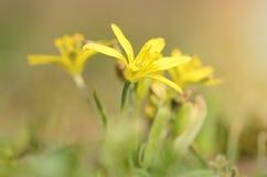 Macro foto di un fiore giallo Immagini Stock