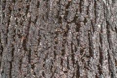 Macro foto invecchiata di struttura di legno Legname grigio con le crepe stagionate Sfondo naturale Contesto di boho o dell'annat fotografia stock