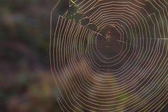 Macro fotografia della natura di una ragnatela naturale nel parco nazionale di Great Smoky Mountains Fotografia Stock Libera da Diritti