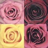 Macro of Four Rose Flowers Retro Vintage Style Stock Photo