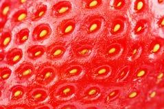 Macro fraise de projectile Images libres de droits