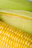 Macro of fresh maize Royalty Free Stock Photography