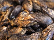 Macro of fresh mussels with shell stock photos