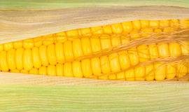Macro Fresh raw corn. On white background Stock Images