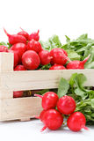 Macro of fresh red radish in crate Royalty Free Stock Photo