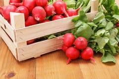 Macro of fresh red radish in crate Stock Image