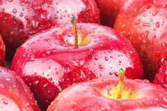 Macro of fresh red wet apples. With water drops Royalty Free Stock Images