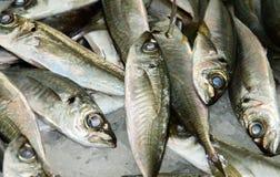Macro of fresh silver fish at a food market stock photo