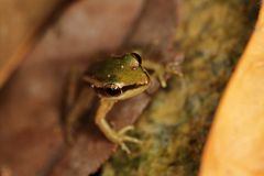 Macro of a frog Stock Images