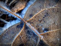 Macro of frost crystals on the Veins of a Fallen Leaf Stock Photo