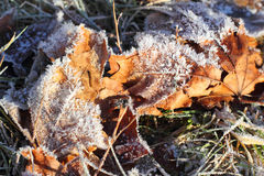 Macro of Frosted Leaves in Winter stock image