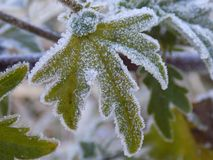 Macro of frosty leaf. Close--up of ice crystals on a leaf in winter Stock Photo