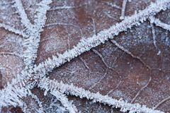 A macro of a frozen leaf Royalty Free Stock Photos