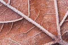 A macro of a frozen leaf Royalty Free Stock Photo