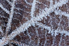 A macro of a frozen leaf Stock Images