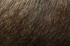 Macro fur texture of brown elk royalty free stock photography