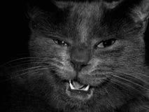 Macro gatto fotografia stock