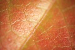 Macro gentle leaf background Stock Photo