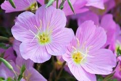Macro of gentle, violet bell flower Stock Images