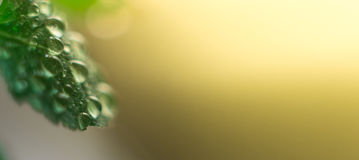 Macro gocce di acqua su una foglia verde nella luce solare fotografia stock