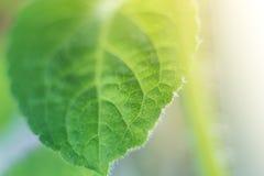 Macro gocce di acqua su una foglia verde nella luce solare fotografia stock libera da diritti