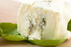Macro gorgonzola Royalty Free Stock Images