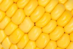 Macro grains of Ripe Corn Royalty Free Stock Photos