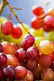 Macro grape Royalty Free Stock Images