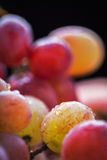 Macro grape Royalty Free Stock Photos