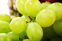 Macro grapes Royalty Free Stock Photography
