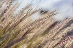 Macro of Grass Stock Image